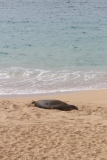Maui 2013 244